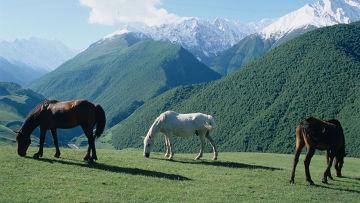 Гостиница для лошадей